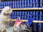 """DAS FUTTERHAUS startet Charity-Aktion """"Tierisch guter Einsatz"""""""
